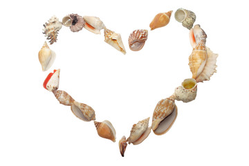 Set of seashell  in the form of heart on white