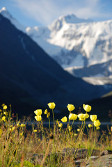 Yellow  maquis, mountain landscape, Altai, Russia