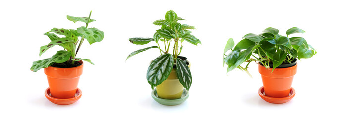 Assorted green houseplants in pots isolated on white background