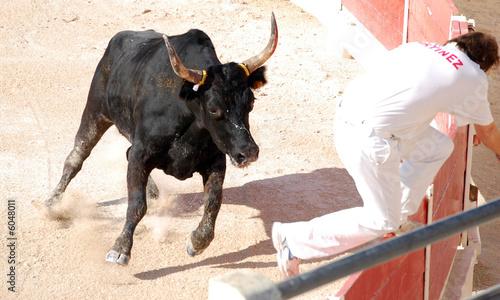 Staande foto Stierenvechten taureau lancé dans l arène