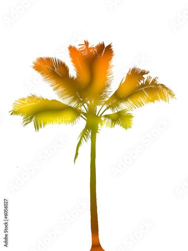 dessin de cocotier couleurs
