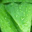 gouttes sur feuilles