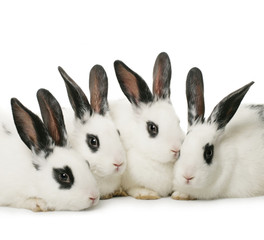 close up portrait of four cute rabbits