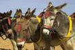 Donkeys At A U.K. Holiday Resort - 6058655