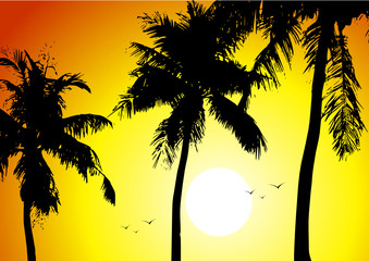 Tropical sunset and palms
