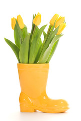 Fresh tulips in yellow vase isolated on white background