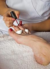 closeup of pedicure - beautician applying nail polish