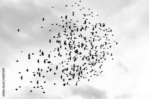 flock - 6087669