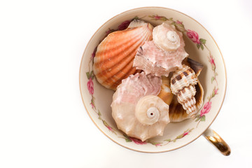 Seashells in the cup from top over white background