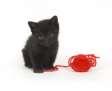 Black kitten and red yarn poster