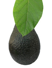 Avocado and leaf