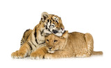 Lion Cub (5 months) and tiger cub (5 months) poster
