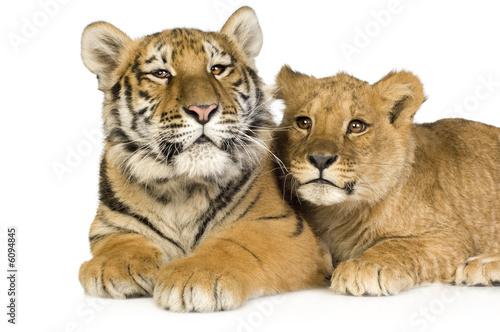 lion-cub-5-miesiecy-i-tygrysiatko-5-miesiecy