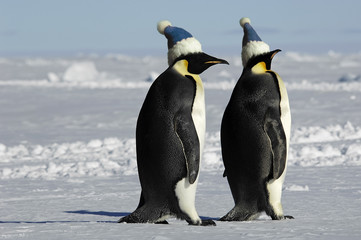 Antarctic penguin pair with caps