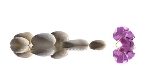 à fleur d'eau