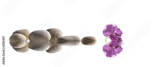 à fleur d'eau - 6105467