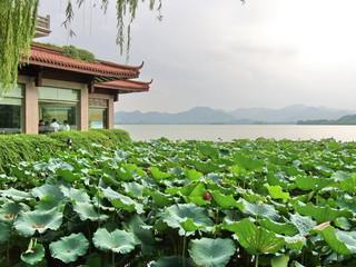Pagode, lotus et saule pleureur, Lac Hangzhou, Chine