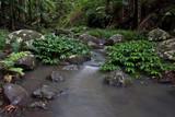 rainforest stream poster