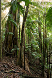 beautiful rays of sunlight come through the rainforest poster