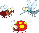 Ladybug, fly and mosquito  poster
