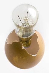 Egg hatching bulb