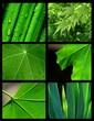 roleta: horticulture