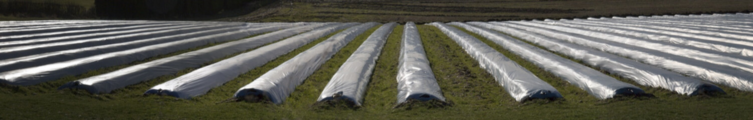 Vegetables under plastic frost sheets