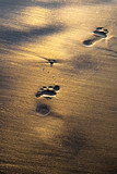 Footprints on wet shining sand on the beach poster