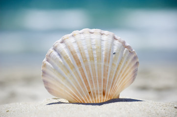 Vacation and tropical summer. Sea shell on the beach