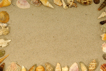 Frame with many different seashells.
