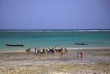 Locals buying fish on the beach Mombassa Kenya Africa poster
