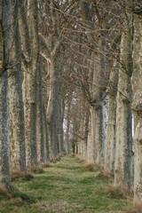 Alleé des arbres