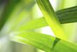 graphisme végétal