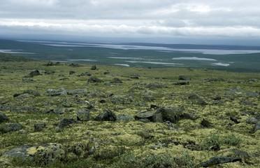 tundra vegetation in Russian Karelia