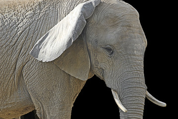 Side view of an elephant at Philadelphia zoo