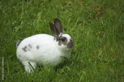 Easter rabbit sitting in fresh spring grass