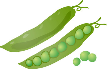 Sketch of peas in a pod Hand-drawn lineart look illustration