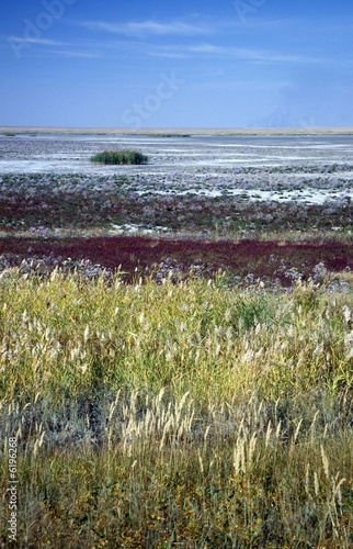 colourful sight of a dried up salt lake in steppe of Kazakhstan