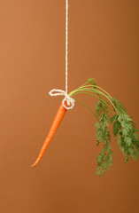 Carrot on a stick detail on brown background