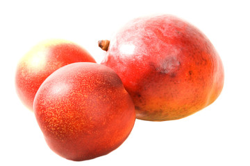 Mango and Nectarines