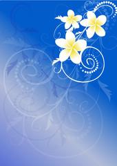 vector illustration- frangipani flowers over blue