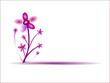 Arbre à fleurs fushia