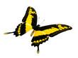 Schmetterling. Freigestellt auf weissem Hintergrund.