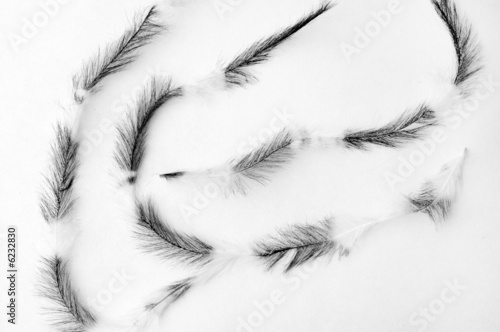 Three plumes on white background