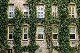 Ivy around windows of Princeton University lecture hall
