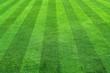 green grass - 6242258