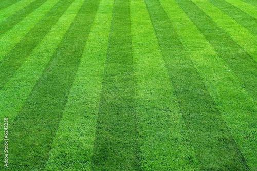 Papiers peints Jardin green grass