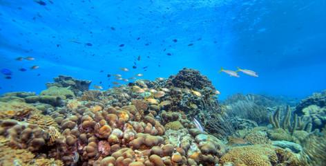Coral reef panoramic