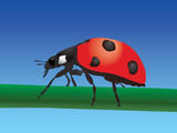 Ladybird on blue sky background poster