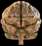 Frontal view of a brain with a subtle circuitry texture. poster